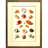 'Muller Shells VI' by Gabriel Muller Framed Graphic Art