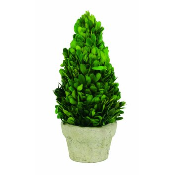 Sage amp Co Preserved Boxwood Cone Desk Top Plant In