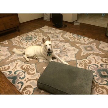 Andover Mills Natural Taupe Amp Teal Area Rug Amp Reviews
