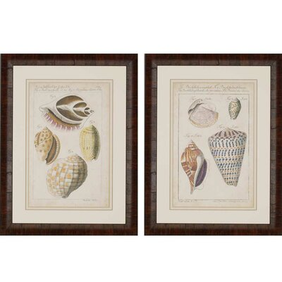 Shell Study by Martini 2 Piece Framed Painting Print Set by Paragon