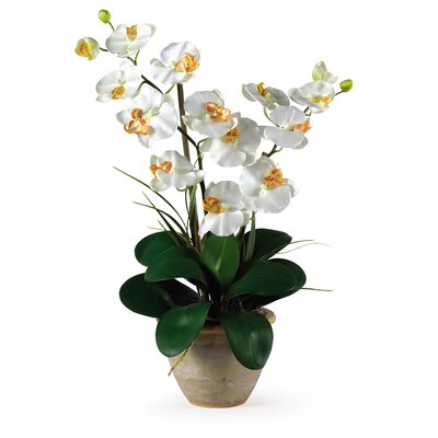 Nearly Natural Double Phalaenopsis Silk Orchid Flowers in Cream