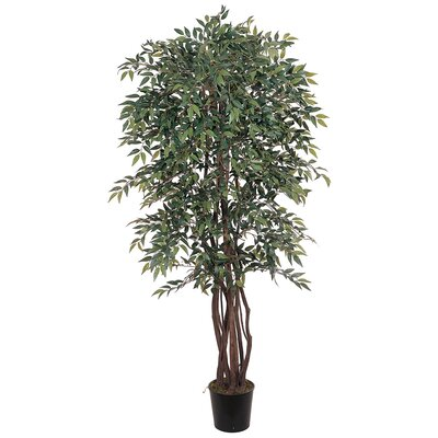 Similax Tree in Pot by Nearly Natural