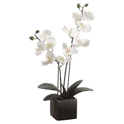 Tori Home Phalaenopsis Orchid Plant in Pot