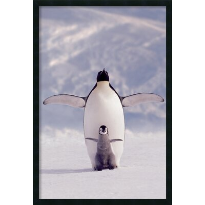 Amanti Art Penguin and Chick Framed Photographic Print