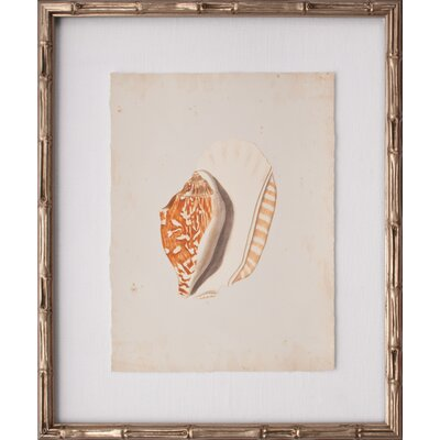 Mini Martini Shell III Framed Graphic Art by Mirror Image Home