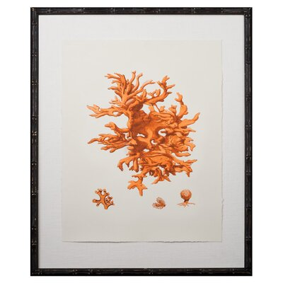 Tangerine Coral Giclee I Framed Graphic Art by Mirror Image Home