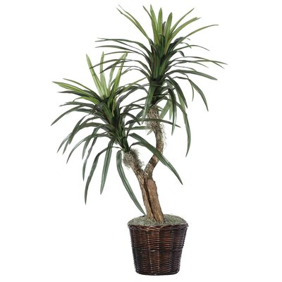 Deluxe Artificial Potted Natural Marginata Tree in Basket by Vickerman
