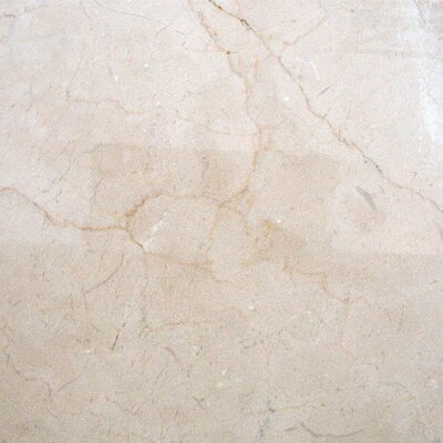 12'' x 24'' Marble Field Tile in Crema Marfil by MSI
