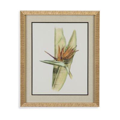 Elegant Tropics II Framed Painting Print by Bassett Mirror