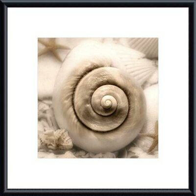Printfinders Iridescent Seashell I by Donna Geissler Framed Photographic Print
