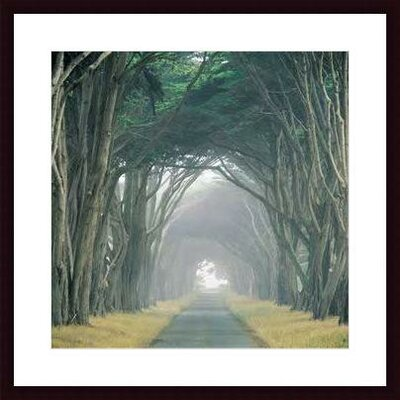 Corridor of Cypress by E. Loren Soderberg Framed Photographic Print by Printfinders
