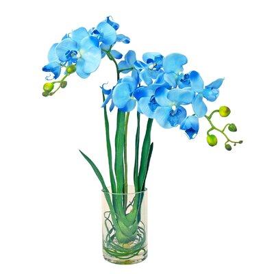 Phalaenopsis Water Vase by Creative Displays, Inc.