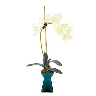 Vanda Orchid Vase by Creative Displays, Inc.