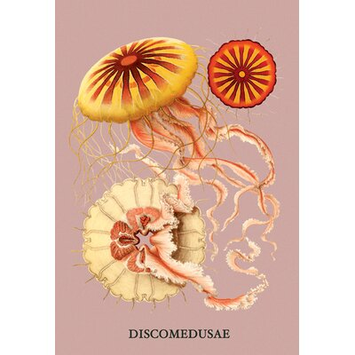 Buyenlarge Jellyfish: Discomedusae #2 by Haeckel Graphic Art on Wrapped Canvas