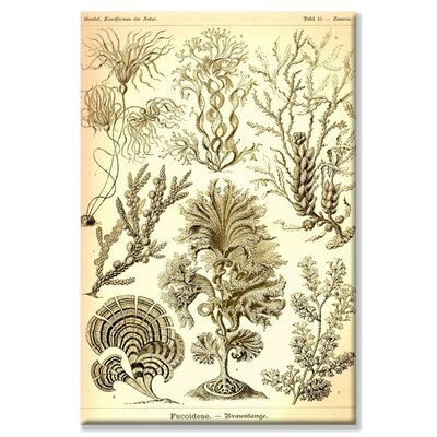 Buyenlarge Seaweed Graphic Art on Wrapped Canvas