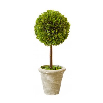 Mills Floral Box Single Topiary in Pot