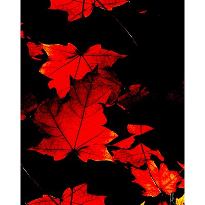 Carlyle Fine Art Nature Autumn No.2 by Jordan Carlyle Graphic Art