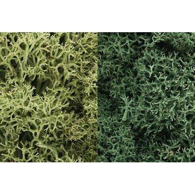 Woodland Scenics Lichen