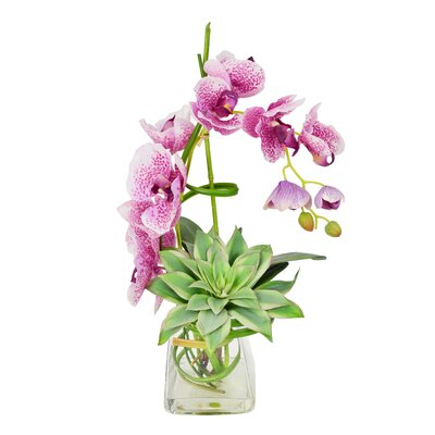 Spotted Phalaenopsis and Echeveria in Water Vase by Creative Displays, Inc.