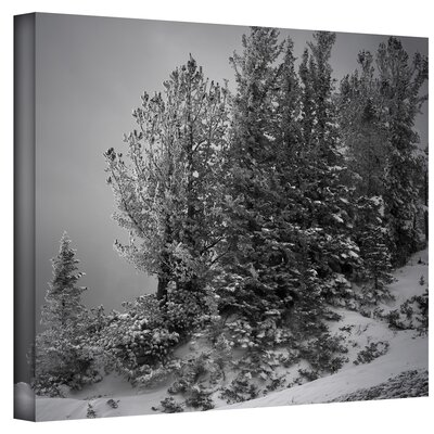 ArtWall ''10000 Feet of Silence'' by Mark Ross Photographic Print on Canvas