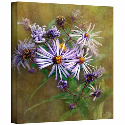 ArtWall 'Flowers in Focus VI' by David Liam Kyle Photographic Print on Canvas