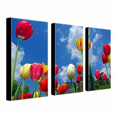 "Trademark Fine Art ""Heaven"" by CATeyes Photographic Print 3 Panel Art Set"