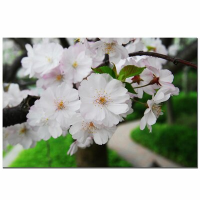 'Cherry Blossom' by Kurt Shaffer Photographic Print on Canvas by Trademark Art