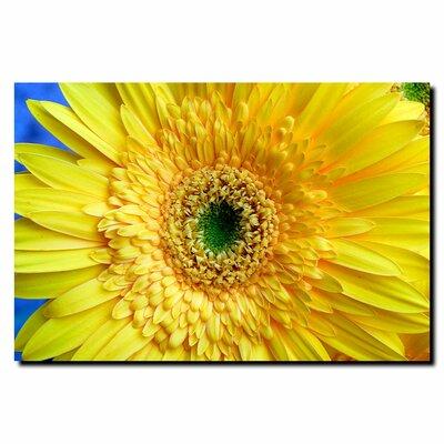 Trademark Fine Art 'Yellow Gerber' by Kurt Shaffer Photographic Print on Canvas