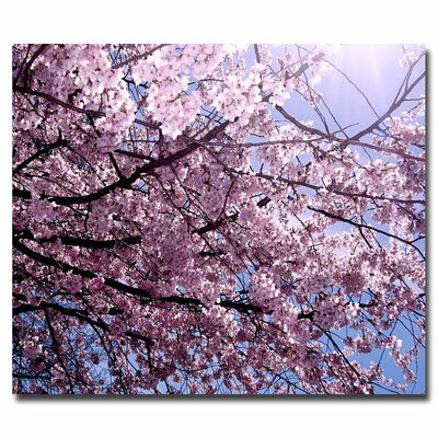 'Cherry Blossom Flare' by Ariane Moshayedi Wrapped Photographic Print on Canvas by Trademark Art