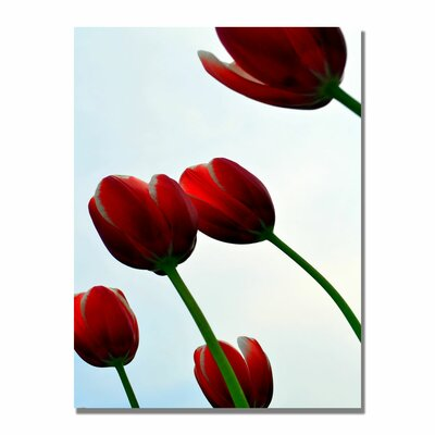 'Red Tulips from the Bottom Up' by Michelle Calkins Photographic Print on Canvas by Trademark ...