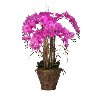 Orchid Arrangement in Fiberstone Pot by Laura Ashley Home