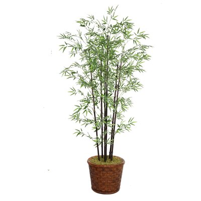 Tall Bamboo Tree in Pot by Laura Ashley Home