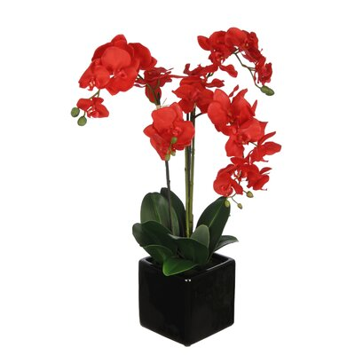 Phalaenopsis Orchid Arrangement in Cube Ceramic Vase by House of Silk Flowers