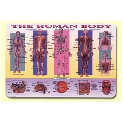 Painless Learning Placemats Human Body Placemat
