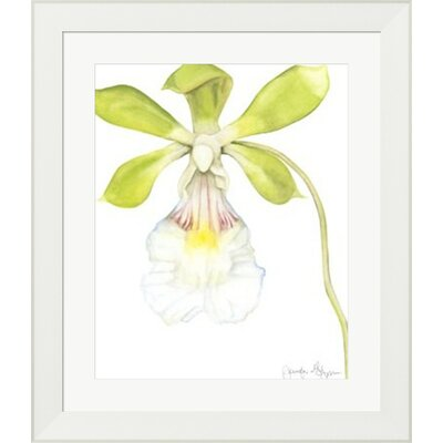 Orchid Beauty I by Jennifer Goldberger Framed Painting Print by Evive Designs