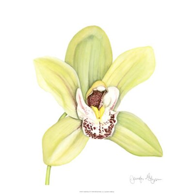 Orchid Beauty II by Jennifer Goldberger Painting Print by Evive Designs