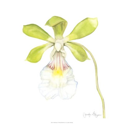 Orchid Beauty I by Jennifer Goldberger Painting Print by Evive Designs