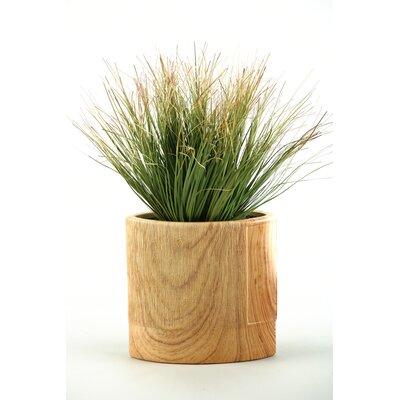 D & W Silks Onion Grass in Oval Ceramic Planter