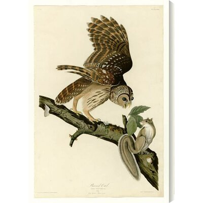 'Barred Owl' by John James Audubon Painting Print on Wrapped Canvas by Gallery Direct