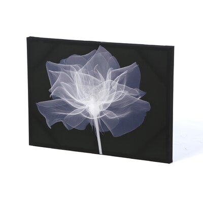 Graham & Brown X-Ray Flower Canvas Art