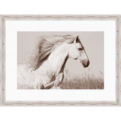 Horse Framed Photographic Print by One Allium Way