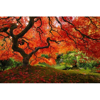 Japanese Maple Photographic Print on Wrapped Canvas by Elementem Photography