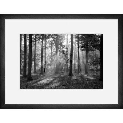 Misty Forest Framed Photographic Print by Darby Home Co