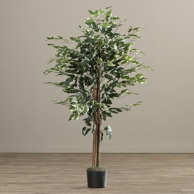 Brianna Variegated Bush Tree in Pot by Bungalow Rose