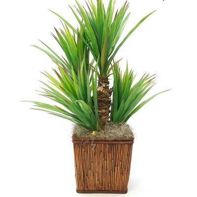 Decorative Basket Yucca Heads by SouthernHomeAccents