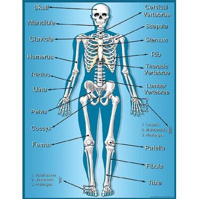 Teacher Created Resources Skeleton Chart