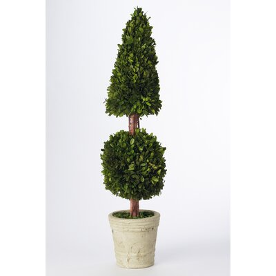Napa Home and Garden Preserved Boxwoods Cone Ball Round Tapered Topiary in Pot