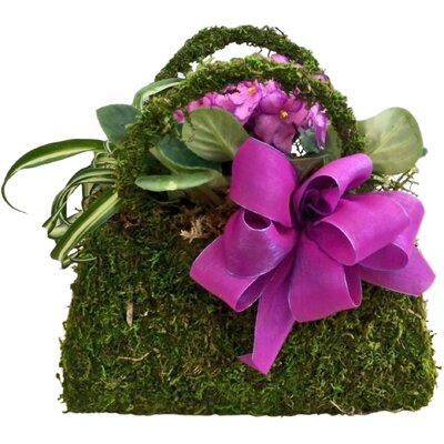 Novelty Hanging Basket by SuperMoss™