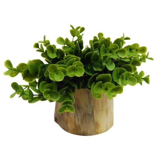 silk flower depot naturalist eucalyptus bonsai desk top plant in planter reviews wayfair. Black Bedroom Furniture Sets. Home Design Ideas