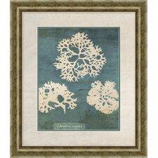 Coral I Framed Graphic Art